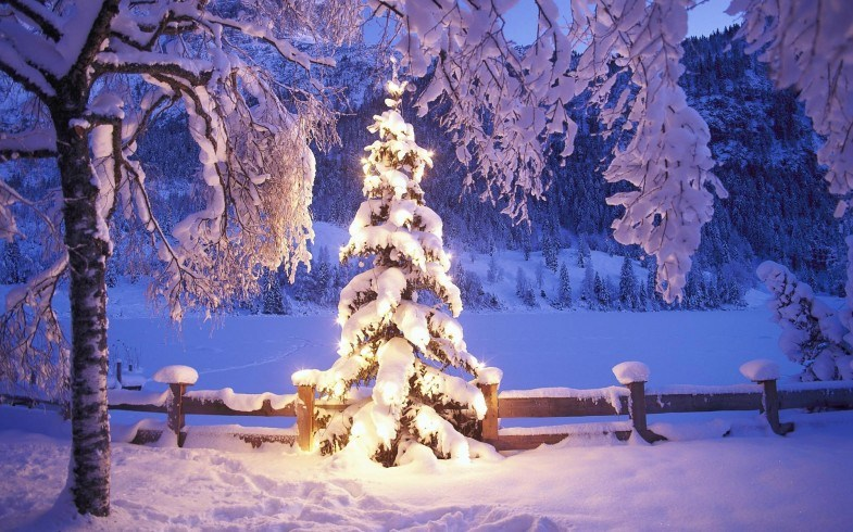 outdoor-christmas-tree-holiday-785x490
